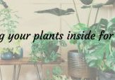 Bringing your plants inside for winter